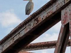 Bernard Bijakowsky - Un héron sur le pont