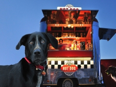 Le dog du Hot dog - Jean-pierre Lefrançois