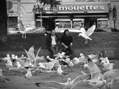 Les mouettes  par Jean-Pierre Lefrançois
