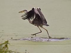 Il marche sur l'eau par Bernard BIJAKOWSKI