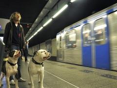 """Métro Molosses - Jean-Pierre Lefrançois série Auteur 1 Concours UR01 2014, """"Métro d'Amsterdam"""", coup de cœur du Juge 2."""