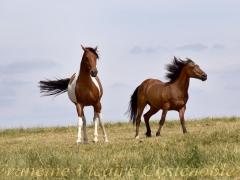 "Portfolio - Francine Vicaire Costenoble - ""chevaux"" - 2018"