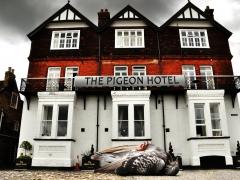 The pigeon hotel par Jean-Pierre Lefrançois